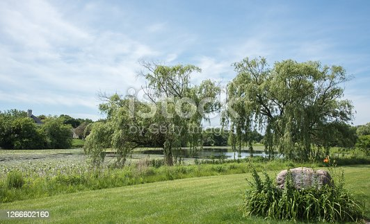 Willow trees on the lake waterfront with native grasses along the Waubonsie Creek Trail in Aurora, Illinois