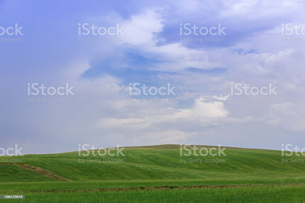 Wave pattern wheat plant royalty-free stock photo