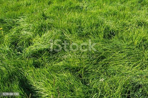 Long grass meadow in the sun