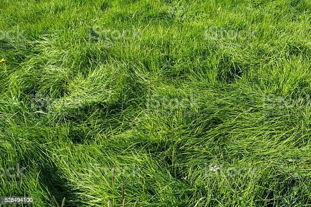 Photo of Waved long grass at dusk