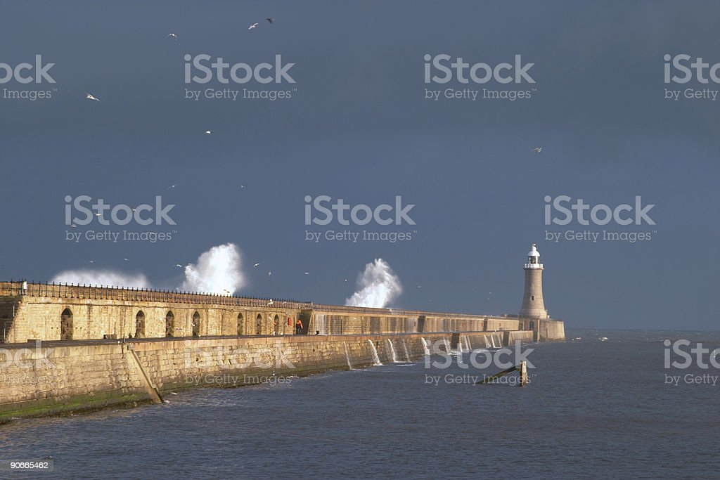 Waves crashing over pier North Shields pier at Tynemouth on a winter day. Many seagulls in flight, lighthouse visible at far end. Waves crashing over sea wall. Aquatic Organism Stock Photo