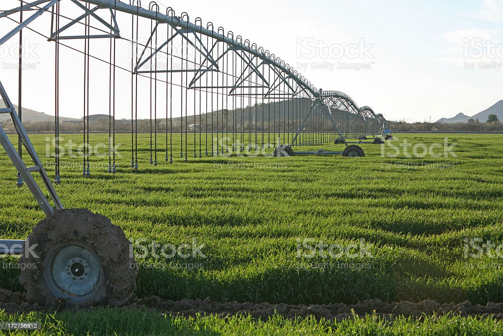 Waves Of Green In The Irrigated Field royalty-free stock photo