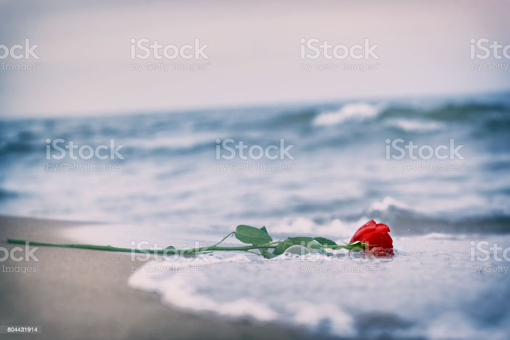 Waves washing away a red rose from the beach. Concept of romantic...