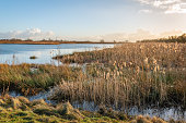 istock Waving reeds in afternoon sunlight 1189504480
