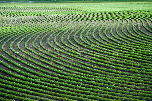wavy lines of planted crops in a field - organic farm stock photos and pictures