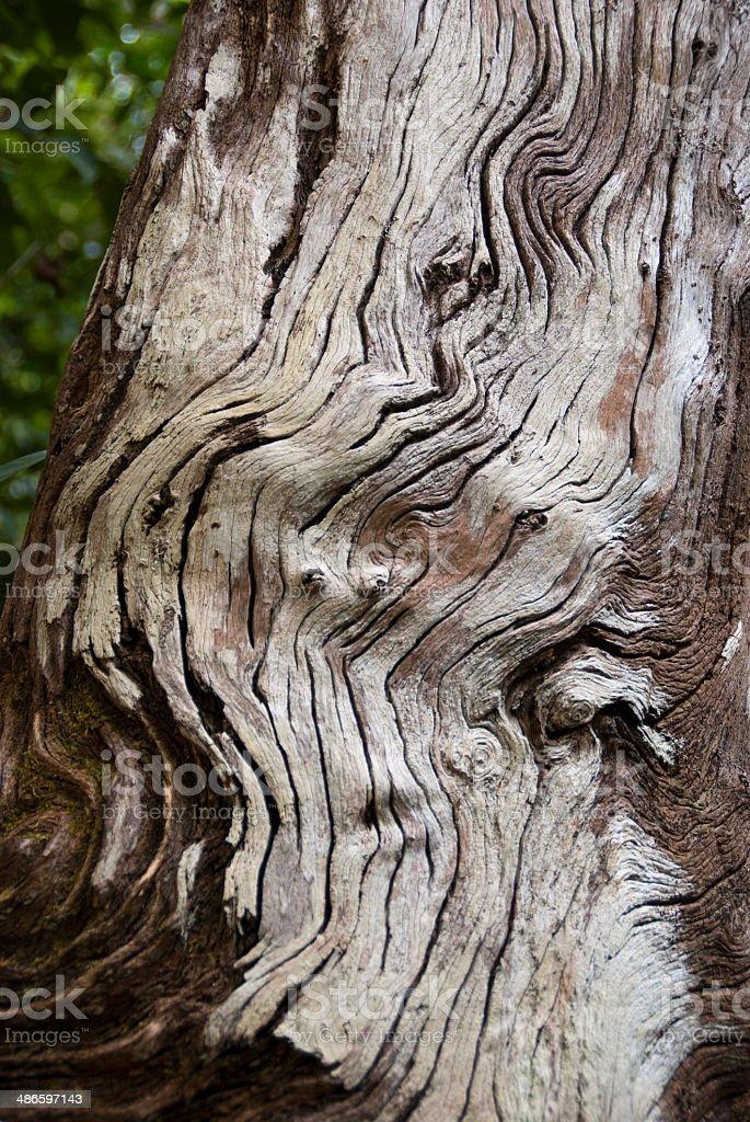 Wavy Tree Texture stock photo