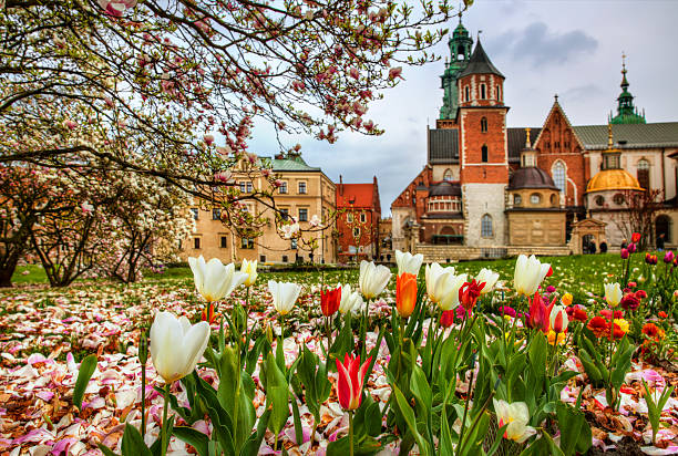 wawel hill - poland stock photos and pictures