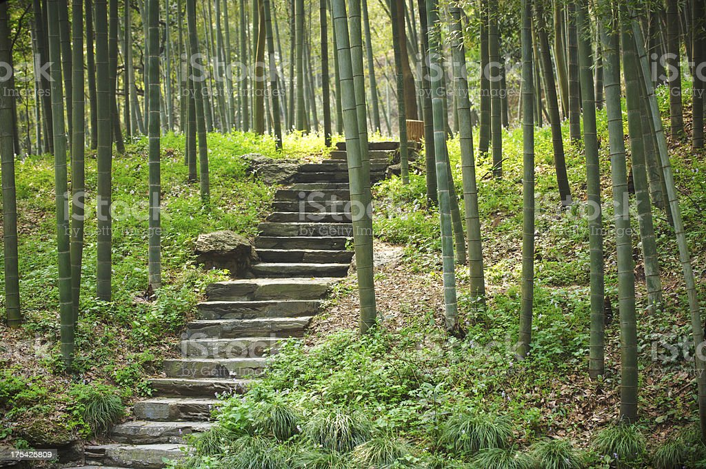 way in bamboo forest royalty-free stock photo