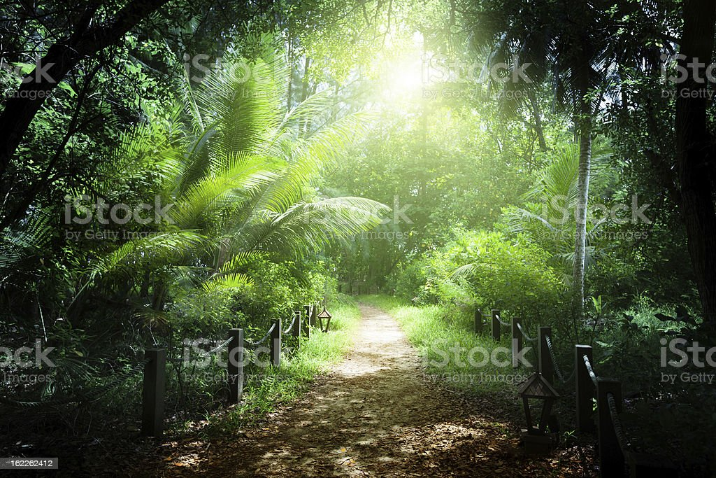 way in jungle of Seychelles islands stock photo
