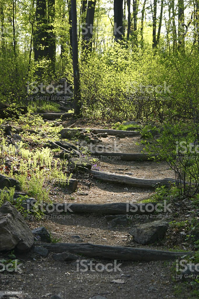 Way of hope - beautiful path through the woods royalty-free stock photo