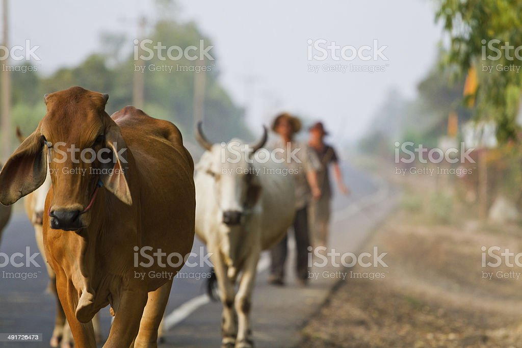 Way of life Countryside in thailand stock photo