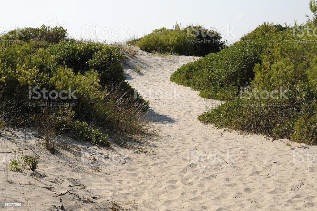 way on the dunes to a beach royalty-free stock photo