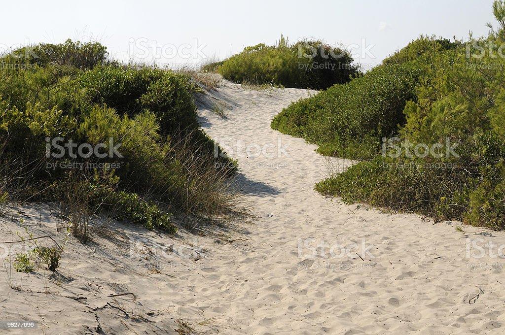 Strada da una spiaggia di dune foto stock royalty-free