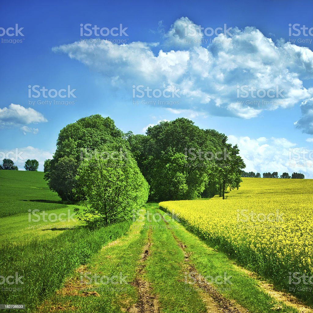 way through fields of rape royalty-free stock photo