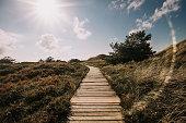 Boardwalk through the dunes, Amrum, Germany