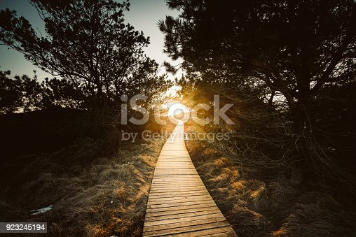 Boardwalk through the dunes, Amrum, Germany