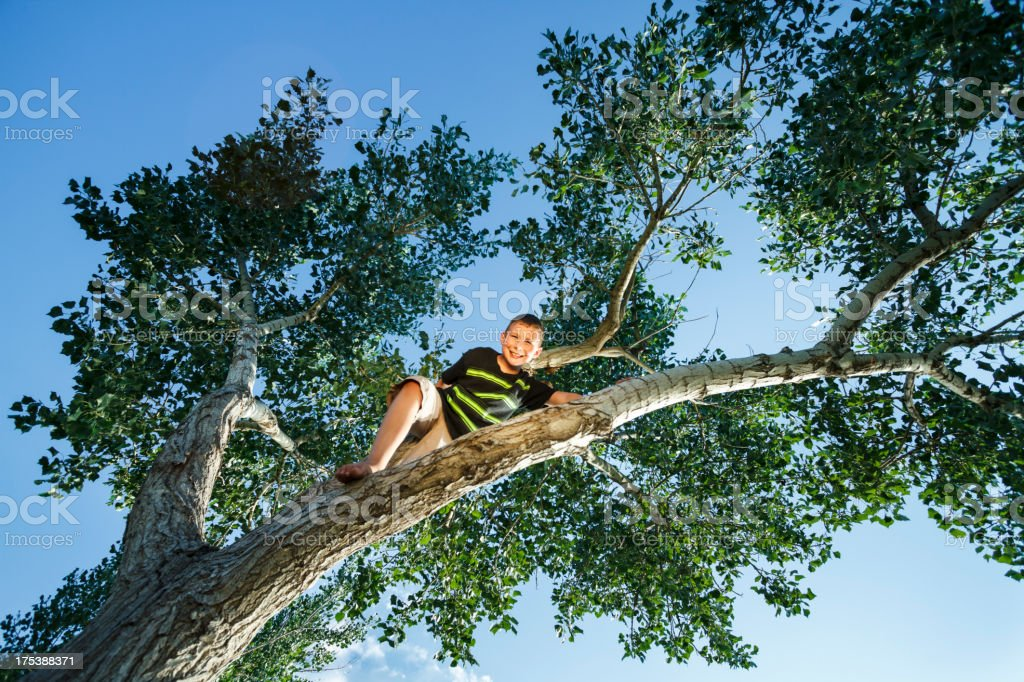 Way Up In A Tree royalty-free stock photo