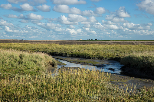 Wddenzee Maritime landscape, heathland, blue sky and cloud