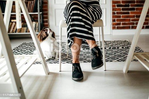 Woman using laptop, typing on keyboard, enjoying working day with her dog