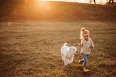 Alabai dog playing with young girl in meadow
