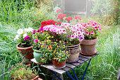 flowers in the garden in the Prignitz