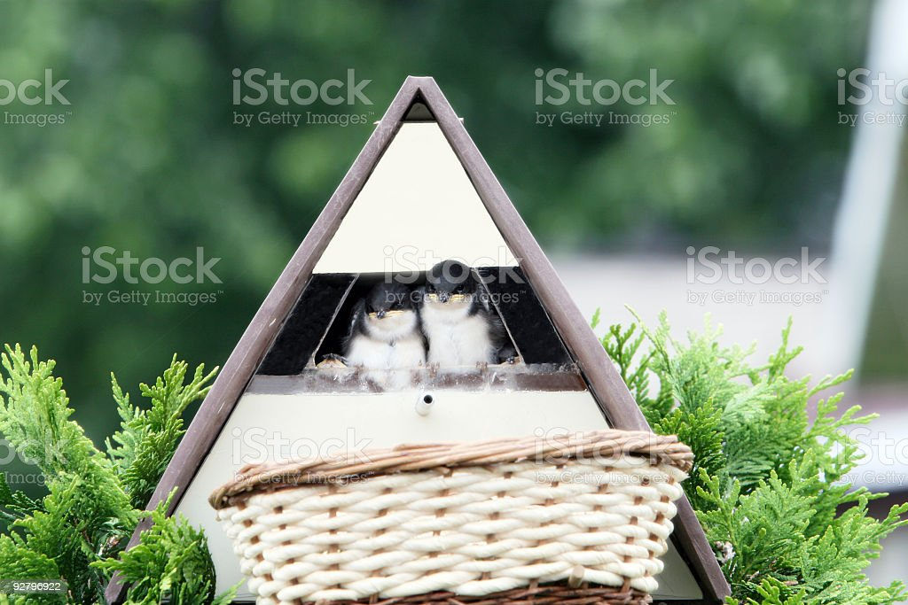 We have someone to watch over us! royalty-free stock photo