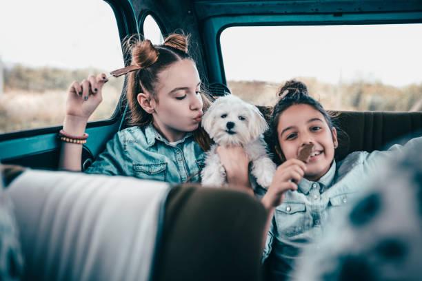 we love our little puppy!!! - sugar cane foto e immagini stock