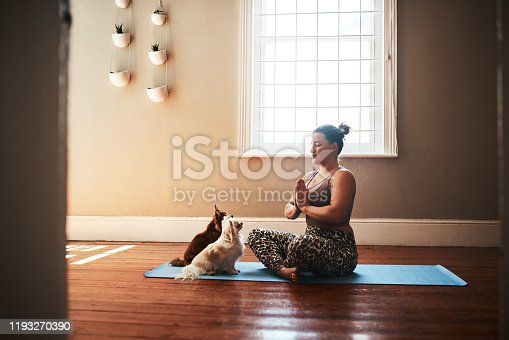 Shot of a young woman meditating on a yoga mat alongside her dogs at home