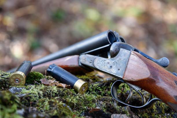 vapen och patroner ligger på ett träd. - rovdjur bildbanksfoton och bilder
