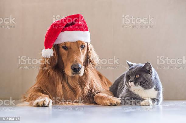 Wearing a christmas hat of dogs and cats picture id628490178?b=1&k=6&m=628490178&s=612x612&h=8n6nh3ukf7wwzazwtbbgakhnxshkeg9ozi7c8pohbbm=