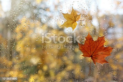 raindrops and fallen maple leaves on the window