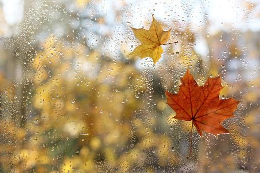 weather characteristic autumn