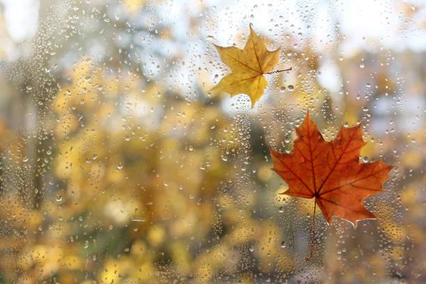 caractéristiques automne météo - pluie photos et images de collection