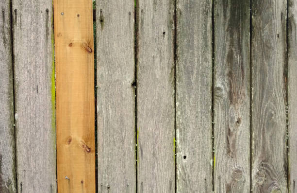 Weathered Cedar Fence with Newer Board stock photo
