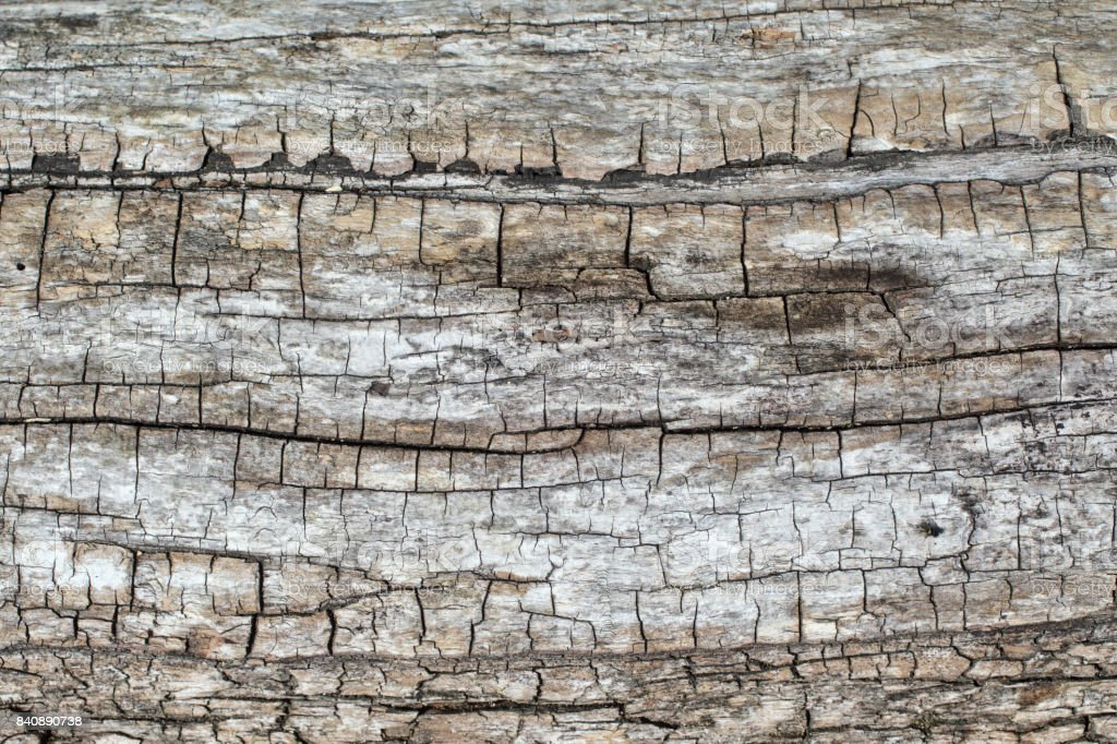 Weathered cork texture below bark layer on tree trunk stock photo