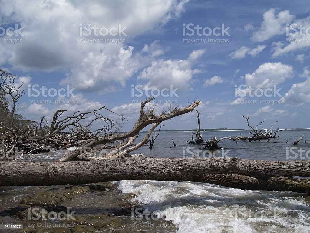 Weathered Fallen Trees Along an Ocean Beach royalty-free stock photo