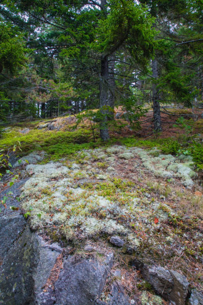 Weathered Granite and Scenic View, Beech Mountain Trail in Acadia National Park, Mount Desert Island, Maine stock photo