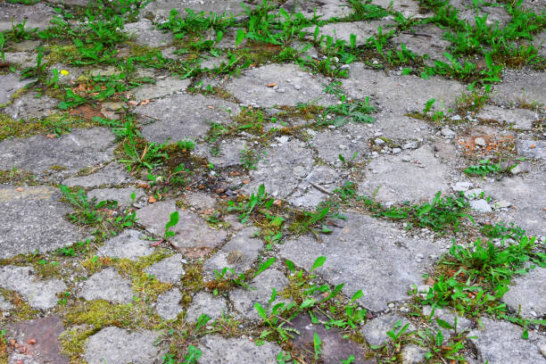 Weathered grey concrete pavement surface stock photo