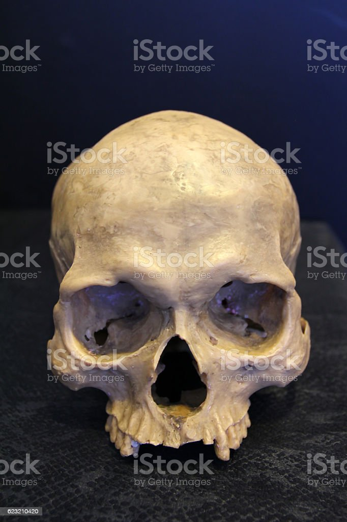 weathered human skull stock photo