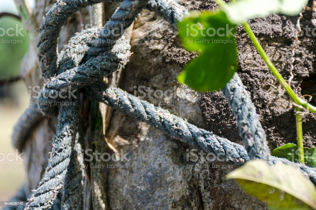 Weathered Nautical Rope tied around a Wooden Post stock photo