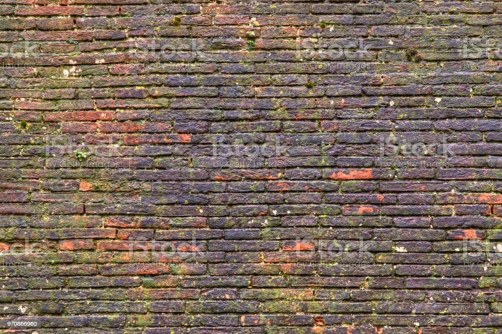 Verwitterte alte Mauer, bewachsen mit Moos und Pflanzen scheint nach einem Regen nass – Foto