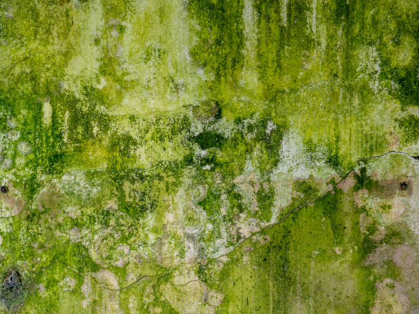 weathered old green wall with moss - wood texture zdjęcia i obrazy z banku zdjęć
