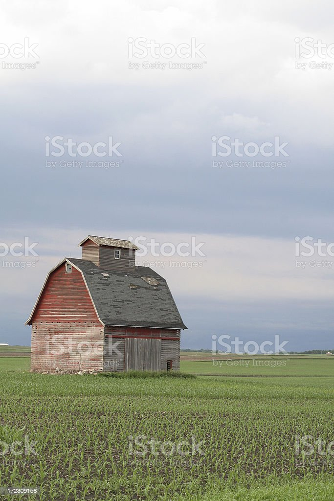 Weathered Red Corncrib in Young Corn royalty-free stock photo
