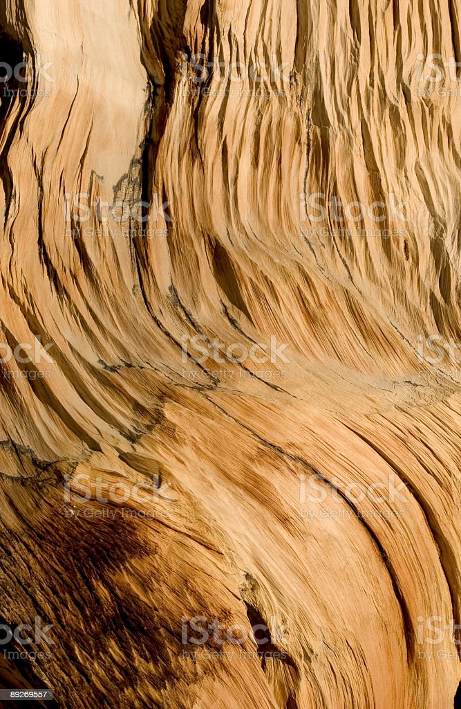 Weathered Tree royalty-free stock photo