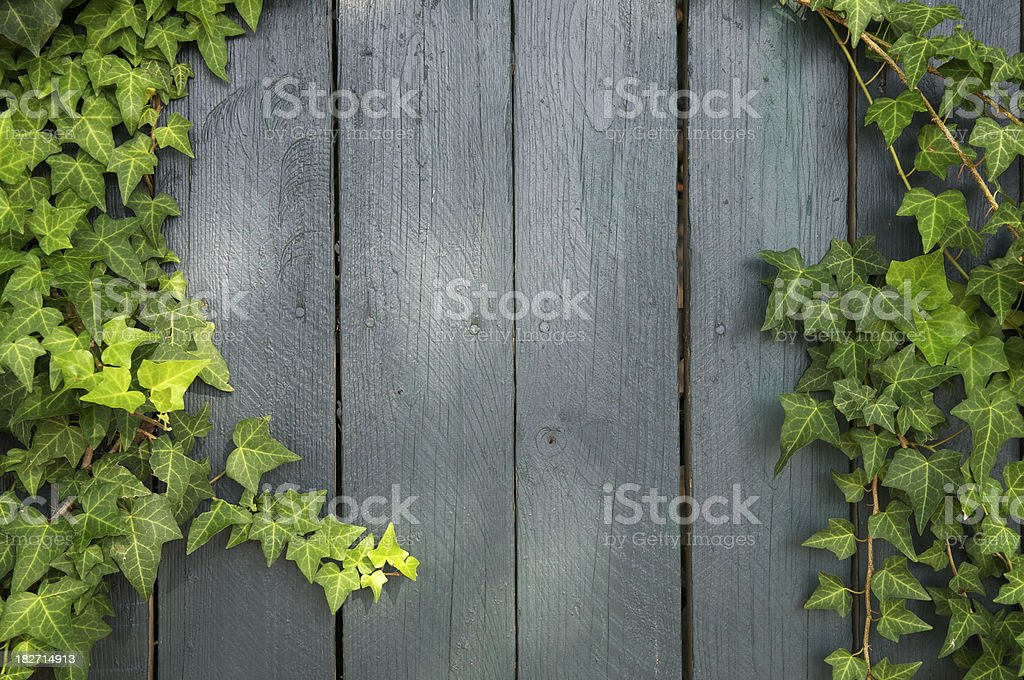 Weathered Wood Background Framed with Green Ivy royalty-free stock photo