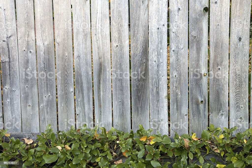 Weathered wood fence with green pachysandra - Royalty-free Backgrounds Stock Photo