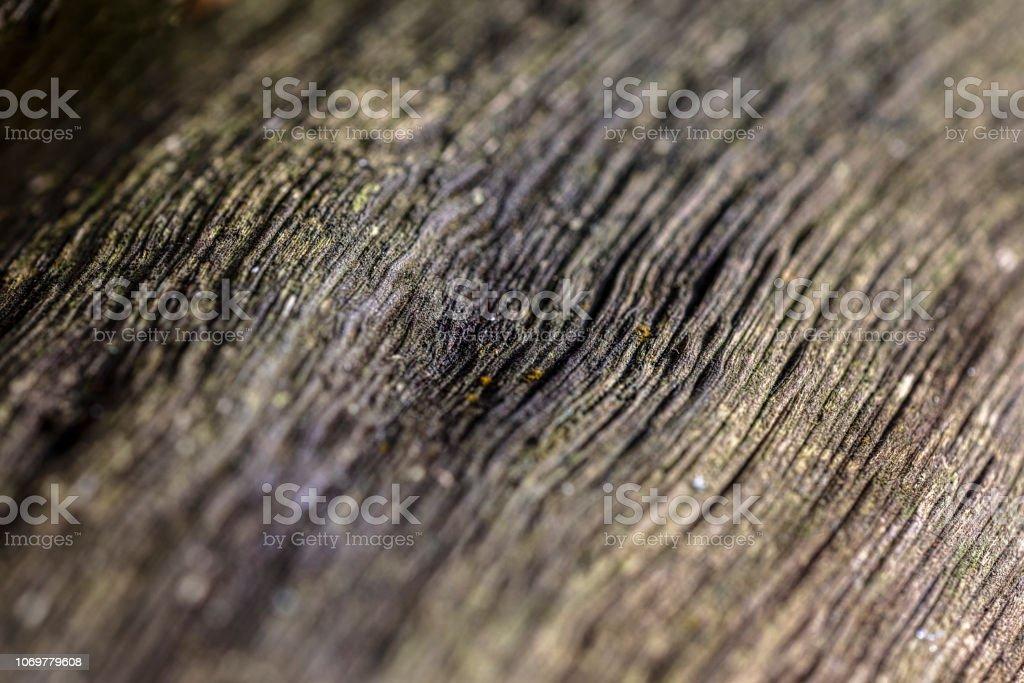 Väderbitna träets yta bildbanksfoto