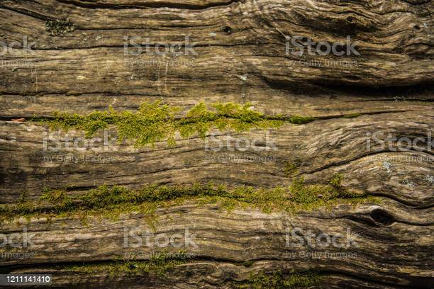 Photo of Weathered Wooden Tree Log with Moss