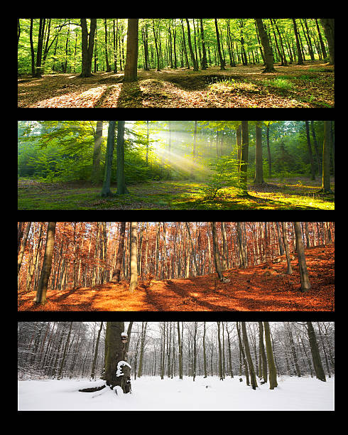 web banners set - four seasons stock photos and pictures