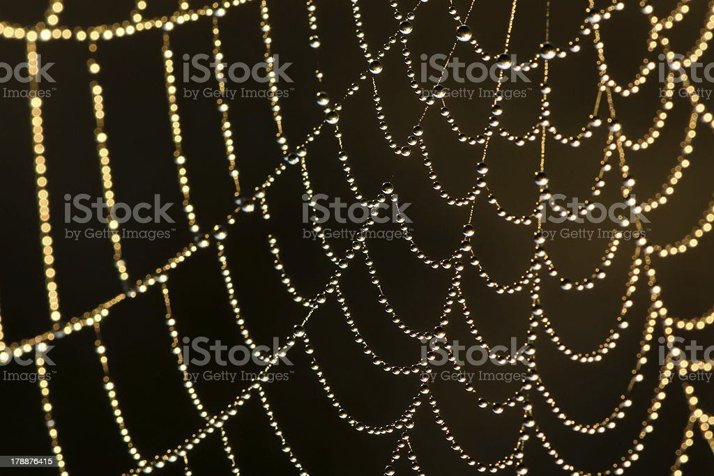 Web in dew royalty-free stock photo
